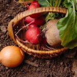家庭菜園の野菜がブーム!? 気をつけること